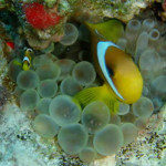 Frau Nemo