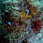 Nemo mit Frau